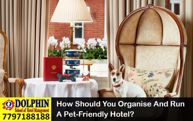 How Should You Organise And Run A Pet-Friendly Hotel?